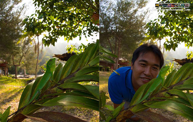 Jurassic Park in Borneo TARP