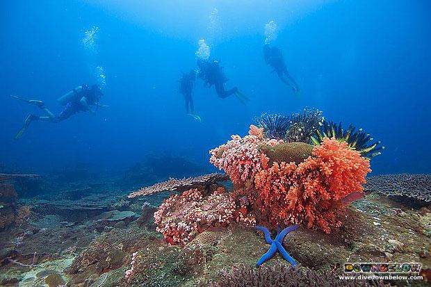 along-dive-620
