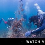 http://www.divedownbelow.com/about-downbelow/video-collection/video-dive-downbelow-ghost-net-removal-november-2014/