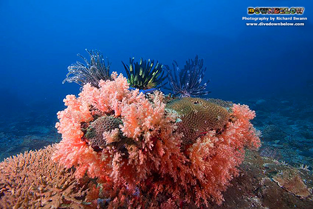 tunku abul rahman marine park, MERC, marine ecology research centre, dive centre, padi 5 star centre, gaya island, gayana island resort, scuba diving, padi discover scuba diving, promotion, luxury travel, resort spa, snorkel safari, leisure diving