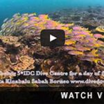 http://www.divedownbelow.com/about-downbelow/video-collection/scuba-diving-dive-sites-tarp/