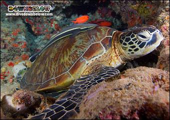 turtle-rocks