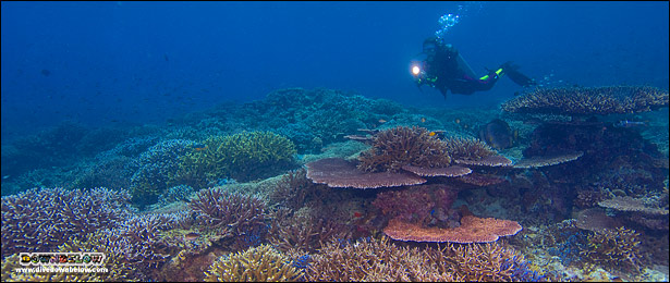 A Diver with a light over beautiful corals in the TAR Park, Kota Kinabalu, Sabah