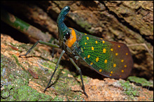 Colourful, horned insect