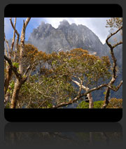 Kinabalu Park + Poring Hot Springs Day Trip