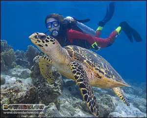 Discover SCUBA gives you immediate access to the beauty of the underwater world.