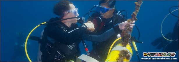 Advance your Open Water Diver Qualification and increase your knowledge and depth limit in Kota Kinabalu, Sabah