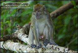 Monkeys inhabit the surrounding rainforest jungle