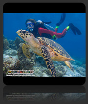 1 Day SCUBA Diving
