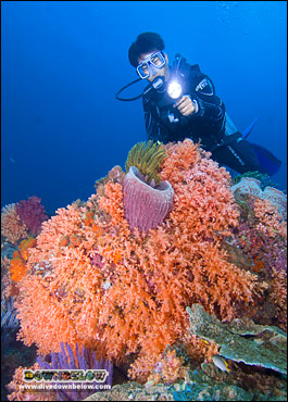 Coralscapes abound for divers in the TAR Park off Kota Kinabalu, Sabah, Borneo