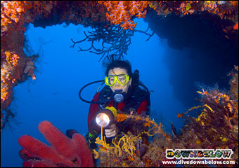Diver on a patch of coral reef in Sipadan