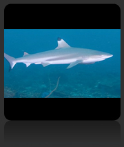 AWARE Shark Conservation Speciality Course
