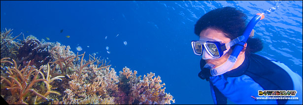 A Snorkeler exploring the corals close-up