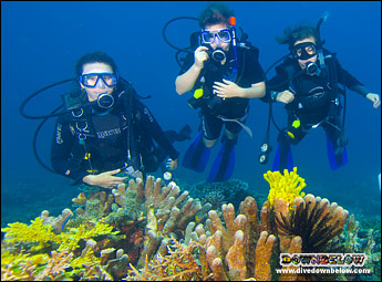 Three divers, 2 new, 1 instructor, floating over beautiful yellow corals after qualifying as PADI Scuba Divers