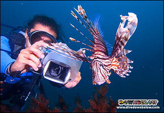 Rent an underwater camera from Downbelow