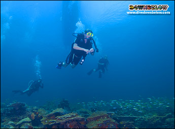 Learn to dive the clear blue waters for the TAR Park near Kota Kinabalu