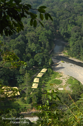 The Borneo Rainforest Lodge compound in Danum Valley