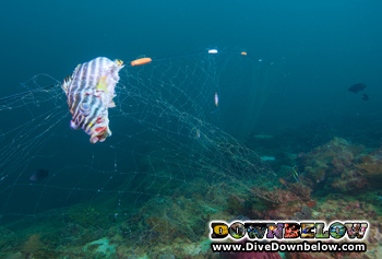 Many fish died in the illegal net found caught on corals in the TAR Park