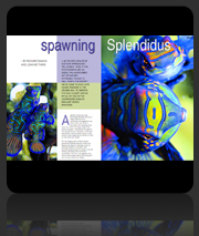 Publication Dive The Blue - Spawning Splendidus Article & Photos
