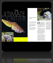 Publication Dive The Blue - Ultimate Critter Article & Photos