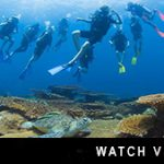 http://www.divedownbelow.com/about-downbelow/video-collection/scuba-diving-school-trip-borneo-divedownbelow/