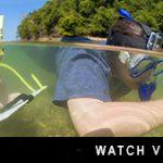http://www.divedownbelow.com/about-downbelow/video-collection/video-university-marine-biology-field-trip-downbelow-marine-wildlife-borneo/