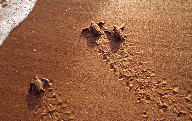 Promotion to witness Borneo Wildlife & Sea Turtles!